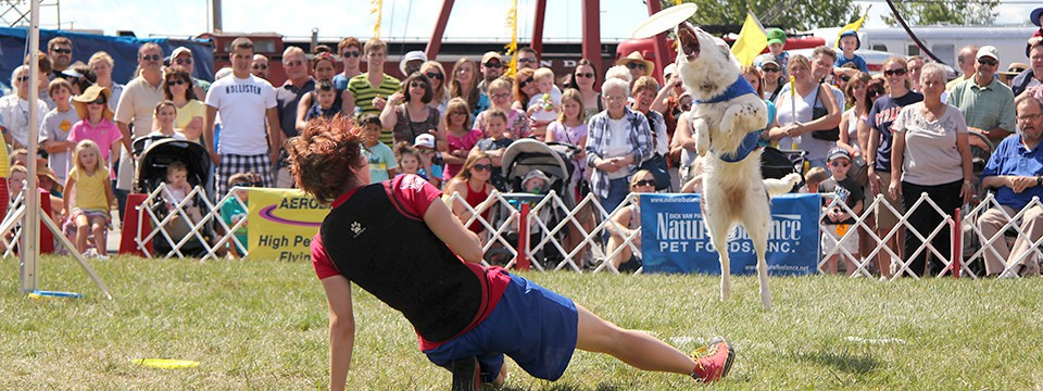 WORLD-CLASS FLYING DISC DOGS